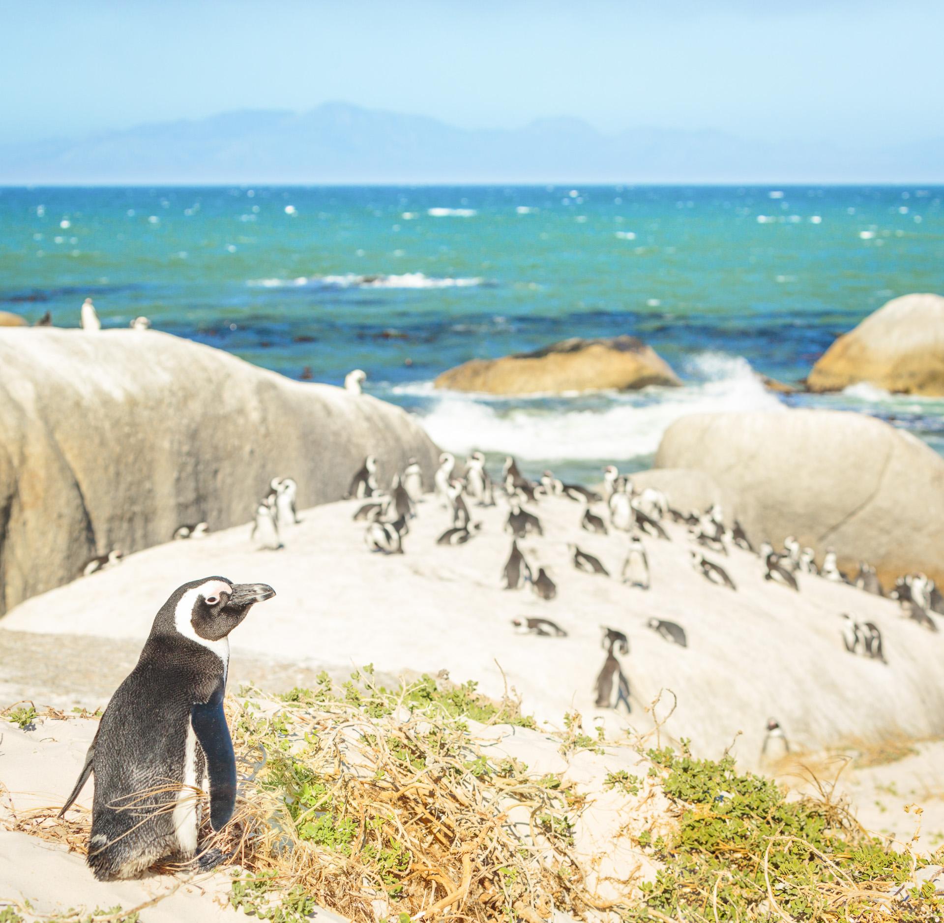 Nett Küchenschränke Südafrika Kapstadt Fotos - Küchenschrank Ideen ...