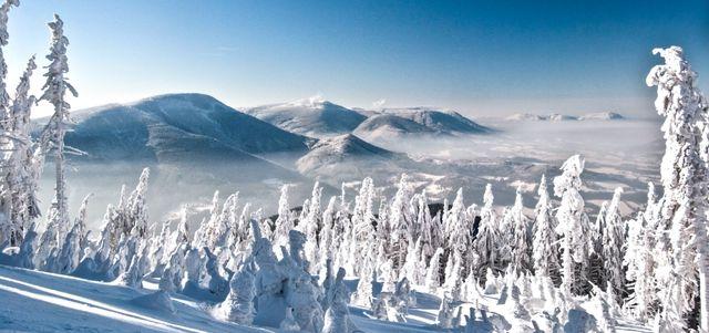 Schneebedeckte Baumwipfel Landschaft