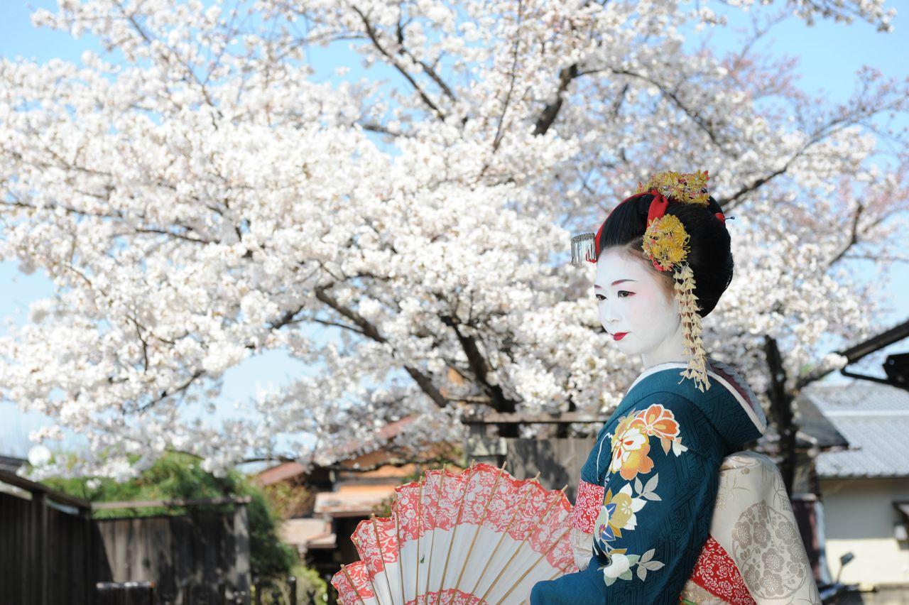 Geisha vor Kirschblüte