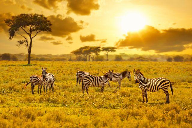 Mitgliederreisen Afrika Orient