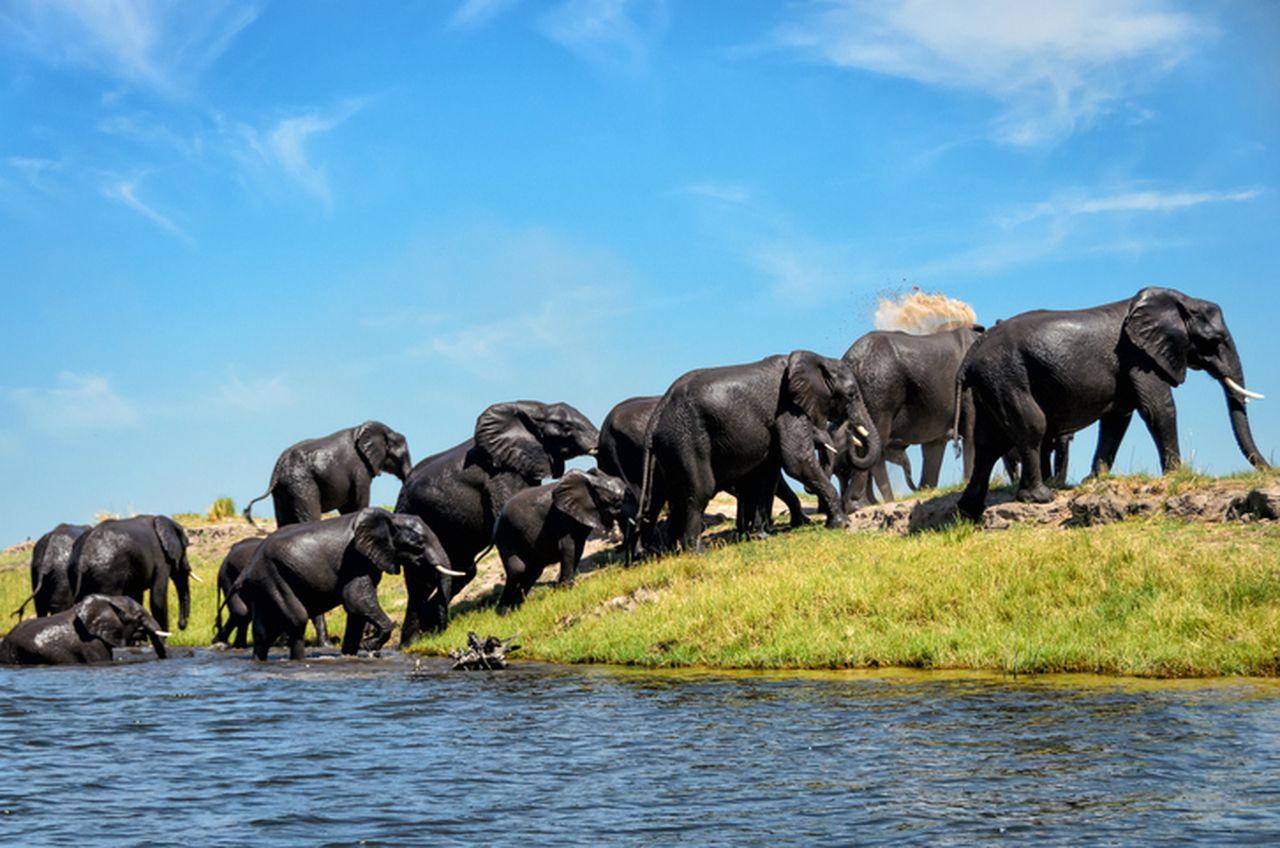 Rundreise Namibia Botswana Simbabwe Elefant