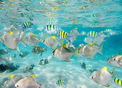 Indischer Ozean Meerestiere