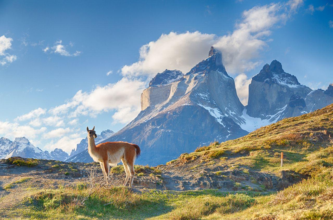 Südamerika Rundreise günstig Alpaka