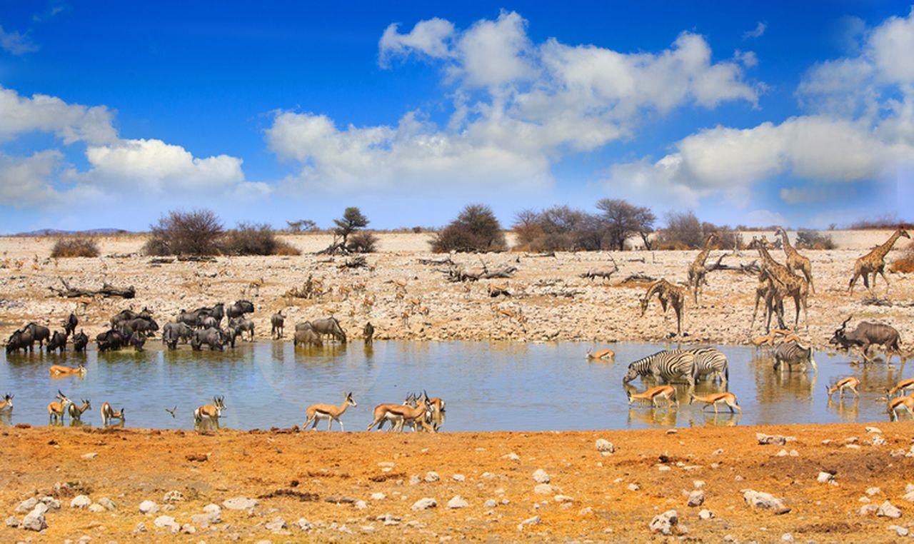 Rundreise Namibia Botswana Simbabwe Wasserstelle