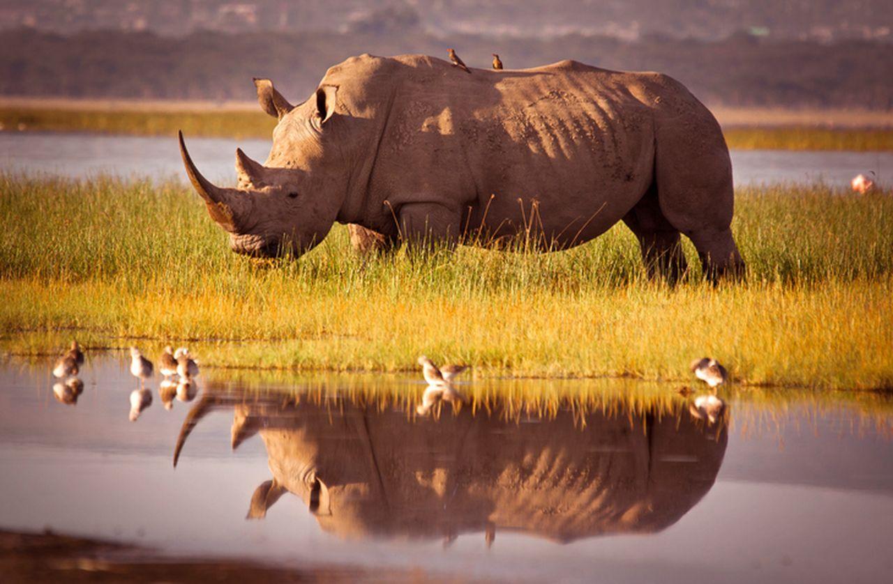 Rundreise Namibia Botswana Simbabwe Nashorn