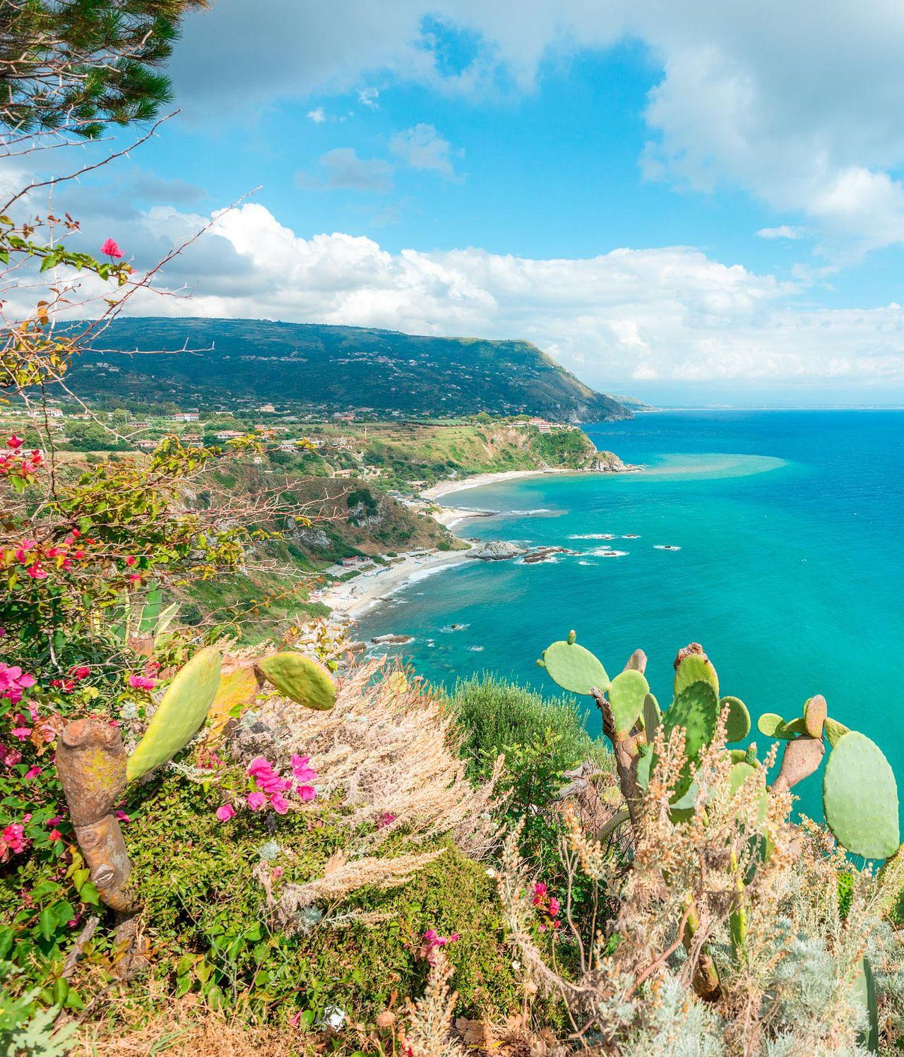 Feigenkakteen an der Küste von Capo Vaticano, Kalabrien