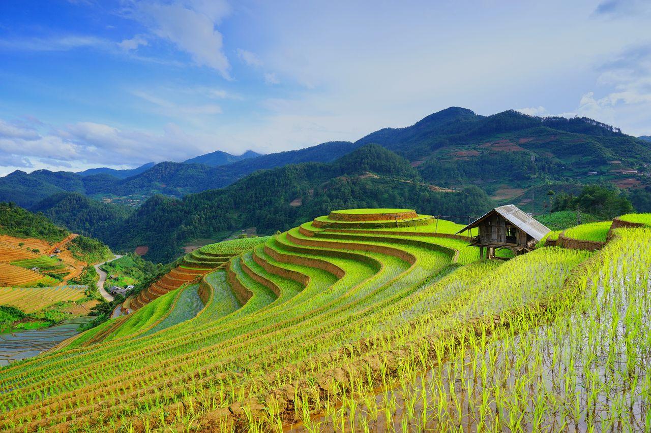 Reis-Felder, Vietnam